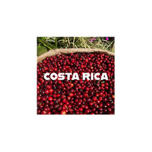 Rainforest Alliance Best Quality Costa Rica SHB Tarrazu Green Coffee Honey Anaerobic