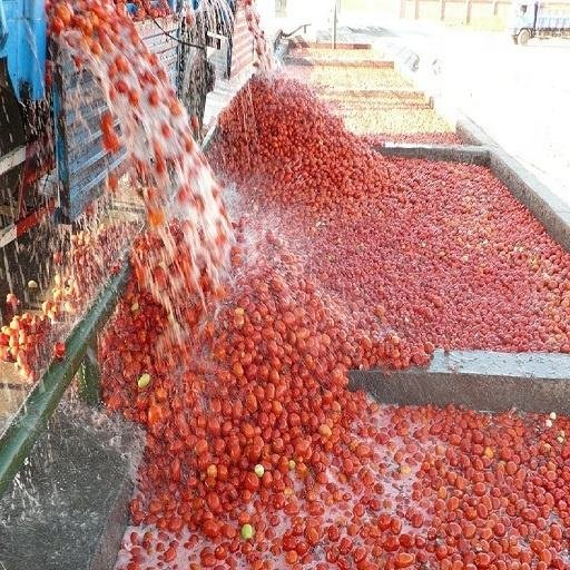 quality supplier of tomato paste for puree salsa quality best brand country like russia soon available canned pack