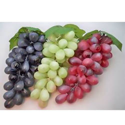 Fresh high quality wholesale grapes
