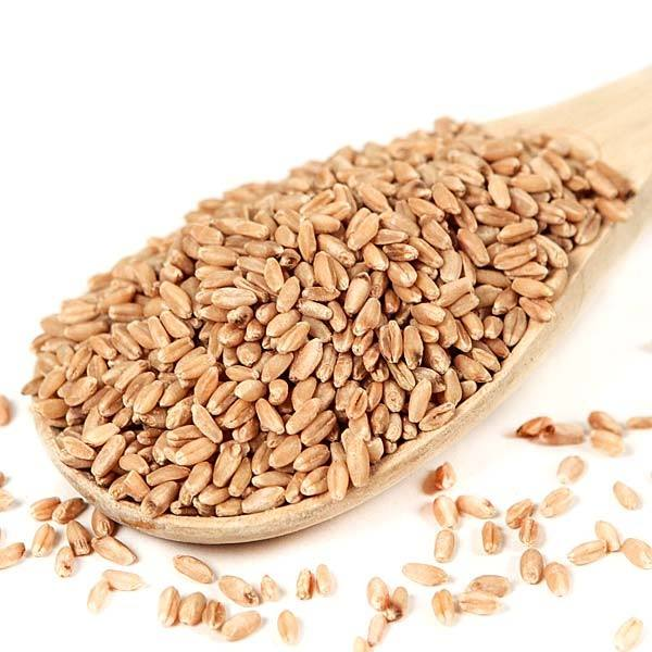 Wheat From Ukraine Dried Grade 3 Wheat Grain best wholesale price