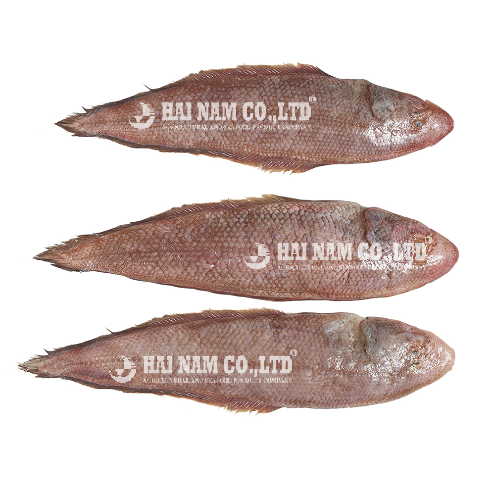 A Grade Frozen Tongue Sole Fish Body and Fillet with 90%-100% Net weight and good price