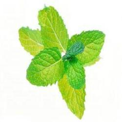 High quality factory price bulk dried peppermint available as crushed