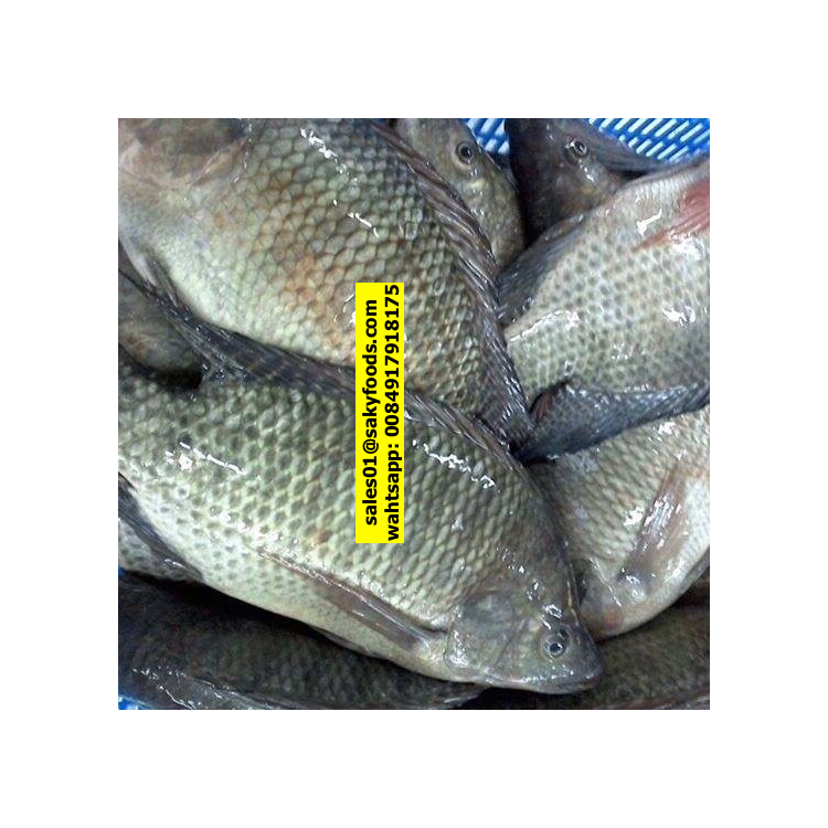 Vietnam Seafood Supplier Frozen Black Tilapia / Frozen Red Tilapia Fish with good price whatsapp-Kakaotalk 0084917918175