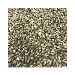 Industrial Hemp Grain Wholesale From Manufacturer Natural 100% Best Quality Factory Price