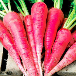 Top Quality Fresh Radish For Sale