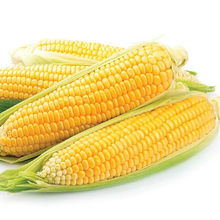 Dried Grade 2 Yellow Maize/Corn, Non-GMO, Fit for Human Consumption and Animal Feed, Origin: (Brazil, Argentina, USA, Ukraine)