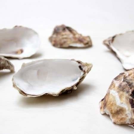 Natural oyster half shells in bulk sale
