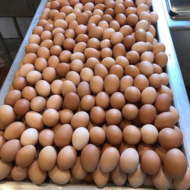 Fresh Farm Chicken Table Eggs/ chicken table eggs Export fresh eggs