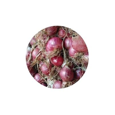 Onion Red Fresh From Thailand