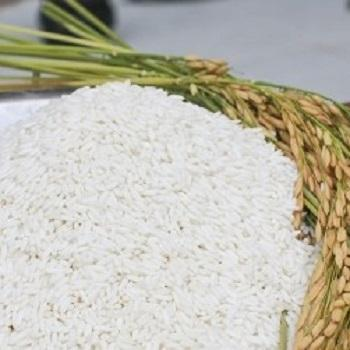 Phu Tan Vietnam High quality Sticky rice