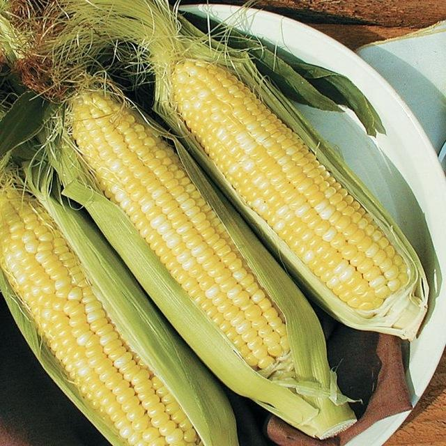 Organic Yellow corn (maize)/GRADE A WHITE AND YELLOW CORN !!