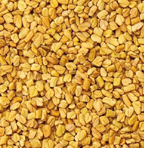Fenugreek India