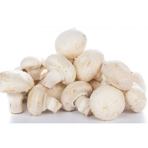 White Whole Mushrooms for Sale with Good Price from China