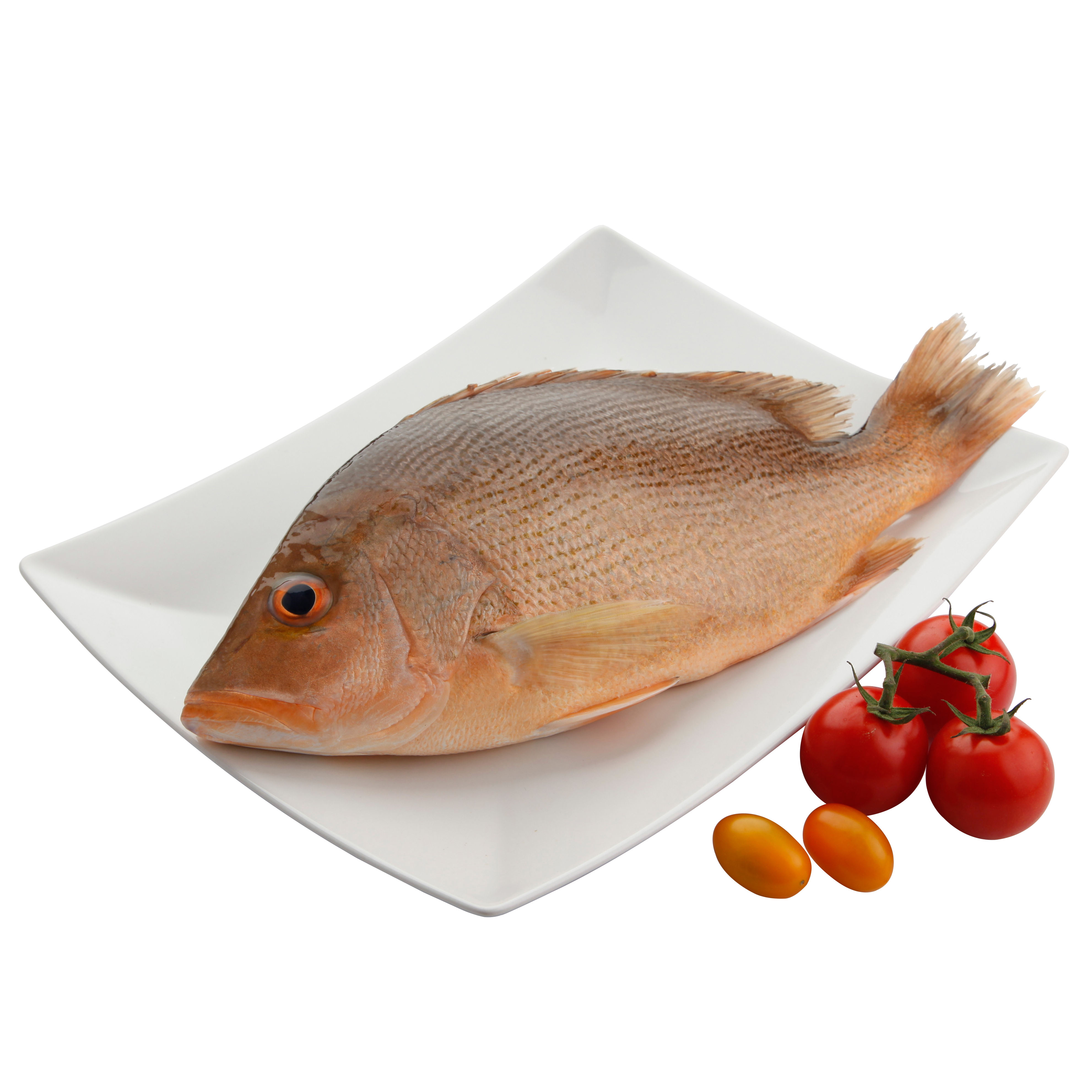 HALAL QUICK FREEZING FISH RED SNAPPER WHOLE