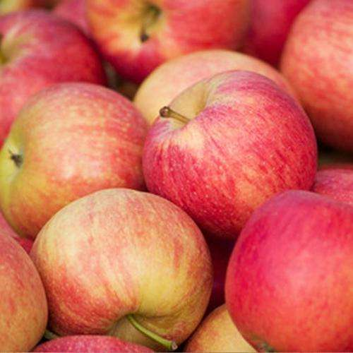 Japan good taste fresh apple, cheap apple fruit price