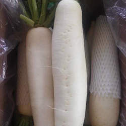 BEST QUALITY Original fresh white radish
