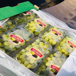 Quality fresh grapes fruits new crop for wholesale