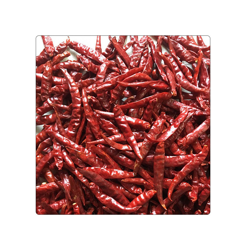 Hot Selling Dried Long Red Chillies