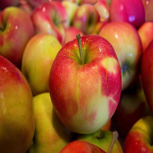 high quality fresh gala apple price