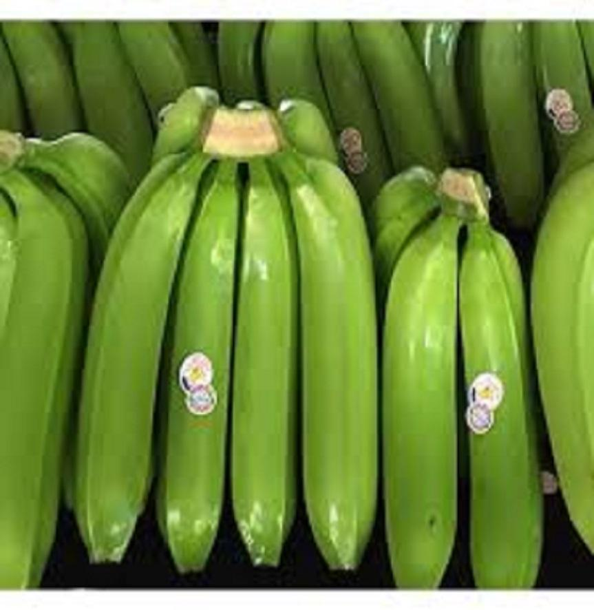 FRESH GREEN CAVENDISH BANANAS FROM VIETNAM/THAILAND