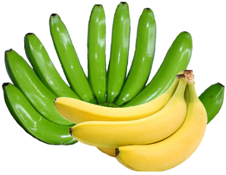 Fresh Long Green Cavendish Banana Exporters In Philippine