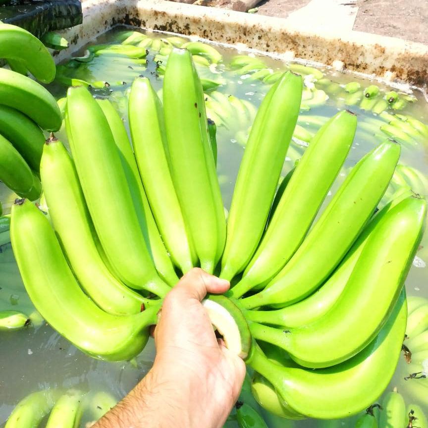 Fresh A Grade Banana 13kg Packing cartons boxes