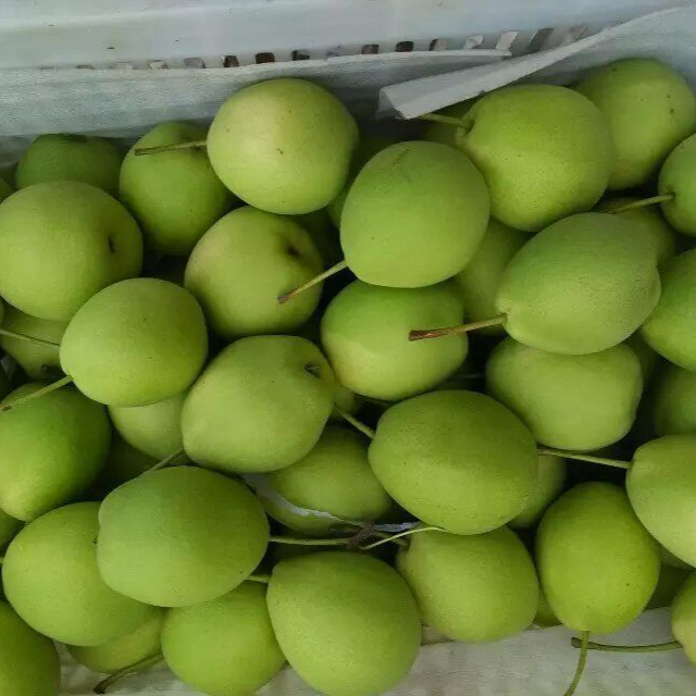Best Price Fresh Pear / Golden Pear Fruit For Sale