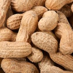 New Crop 100% Bulk Raw Organic Bulk Peanut With Low Price  for Sales