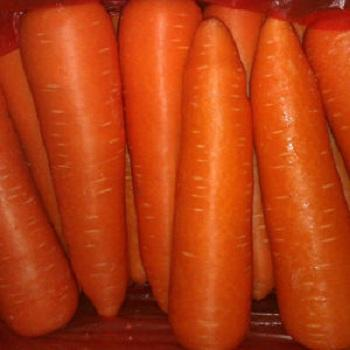 Ukrainian Fresh Organic Carrots at a Special Price