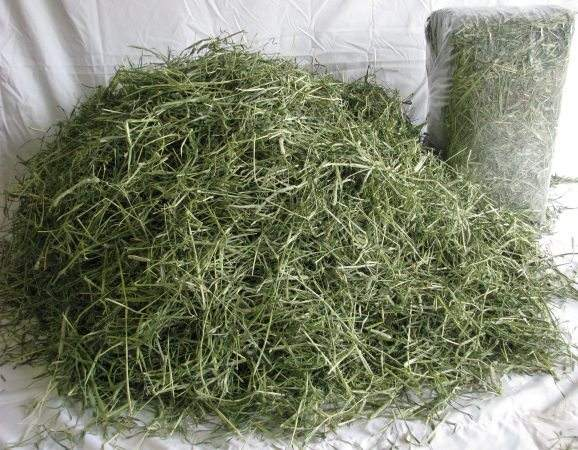 New Sell 2019 Alfalfa Hay / Timothy Alfafa Hay / Rhode Hay FROM KENYA