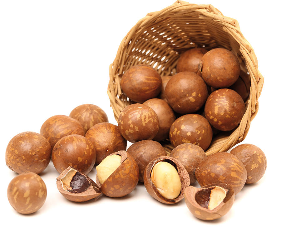 Best Selling Macadamia Nut