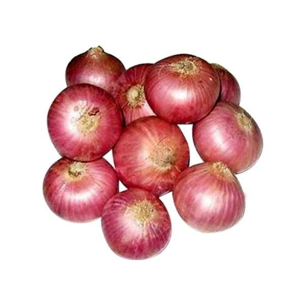 SPAIN exporters fresh prices yellow onion for buyers and importers wholesale !!