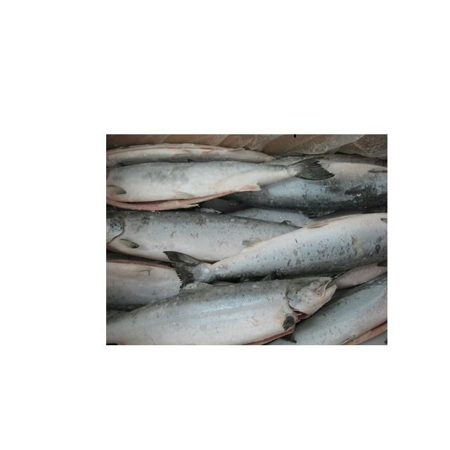 Frozen Atlantic Salmon forsale