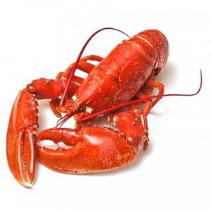 Lobsters/Seafood/Fresh Chilled Lobsters