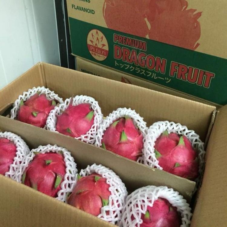 Agriculture Malaysia Premium Grade Fresh Red Dragon Fruit