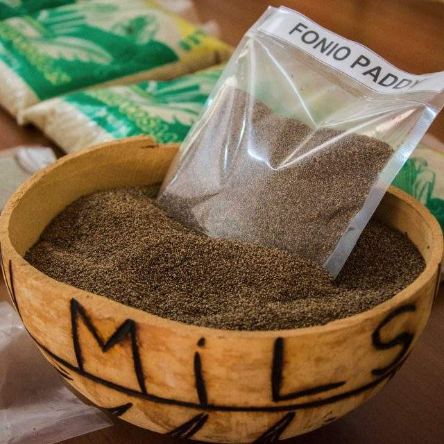cheap Fonio Grains Ready for Export