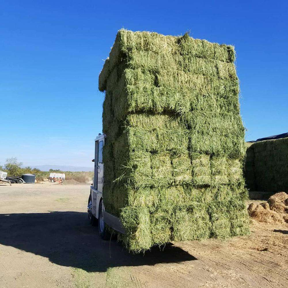 Sell Lucerne Hay, Timothy Hay, Alfalfa good price