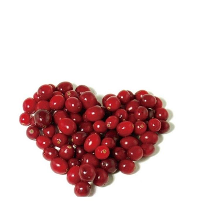 High Quality fruit / Dried Cranberry