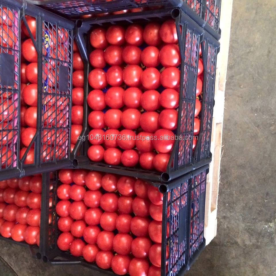 Fresh Tomatoes, red Tomatoes,