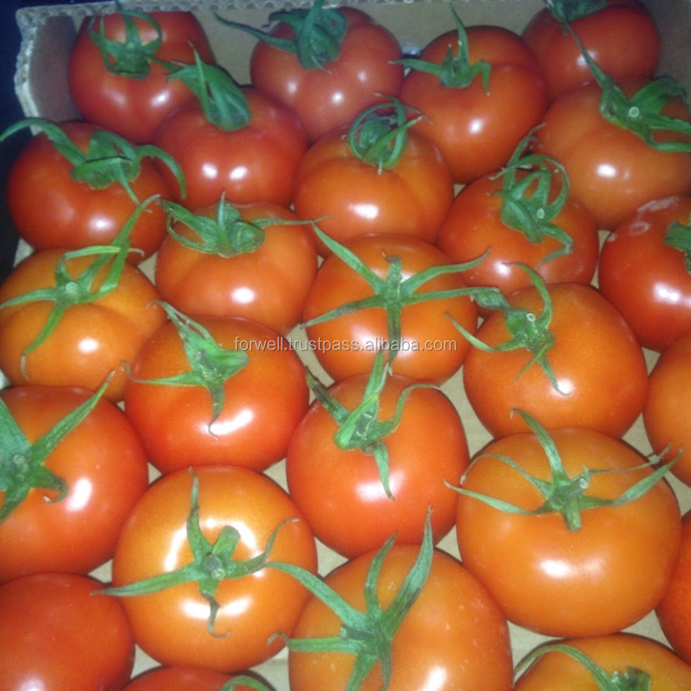 fresh tomato color / fresh tomato specifications / fresh tomato packing