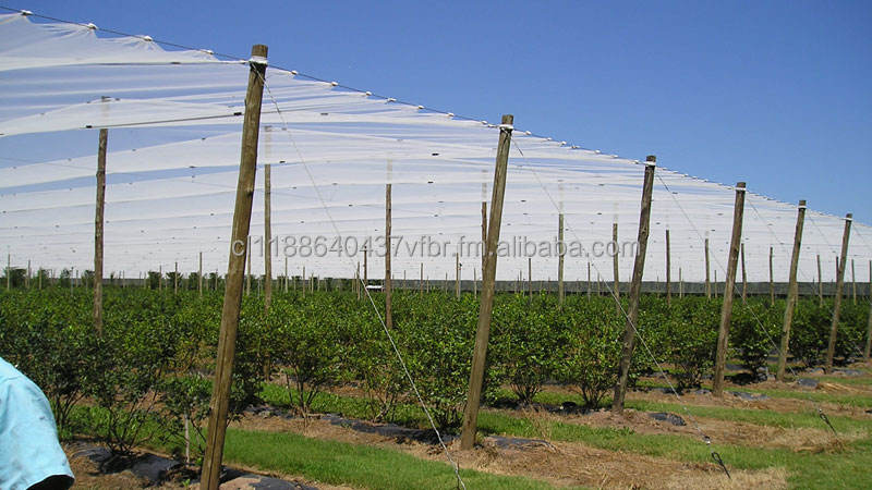 POLES for CEILING FRUIT TREES _ Against birds attack and hailstones _ IMPREGNATED CCA