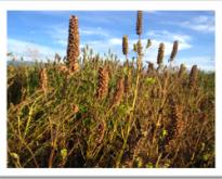 Colima Chia Seeds