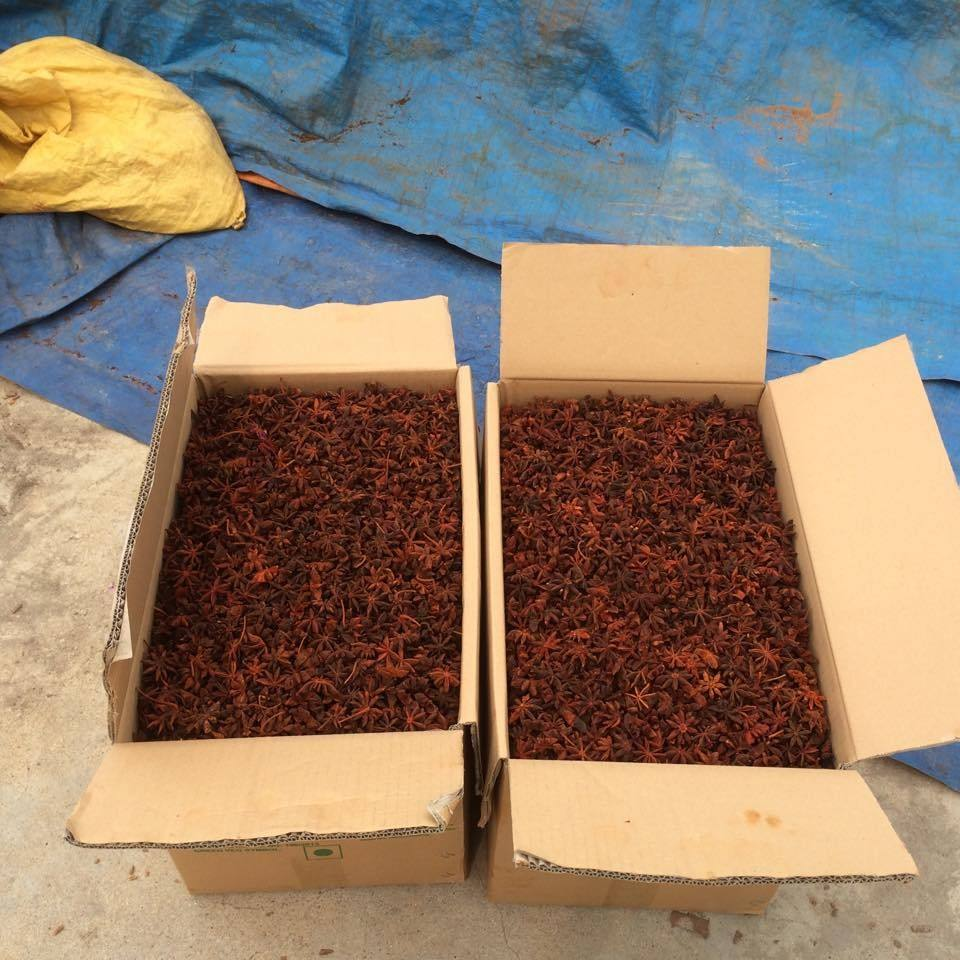 STAR ANISEED STAR ANISE SPICES