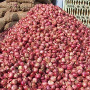 red round onions for sale 4-7cm, 5-7cm, 7-9cm