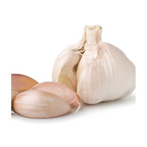 100% Natural Garlic Supplier