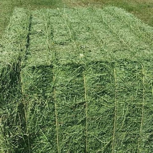 We Sell Alfalfa Hay in Bales