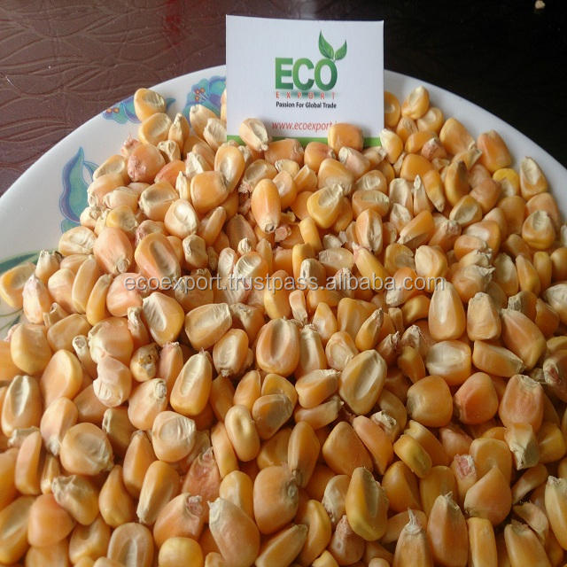Indian Bulk Yellow Maize