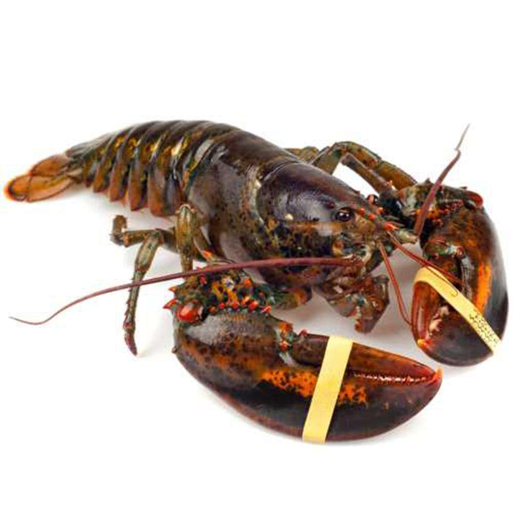 Live Canadian Lobsters / Frozen Lobster Tails
