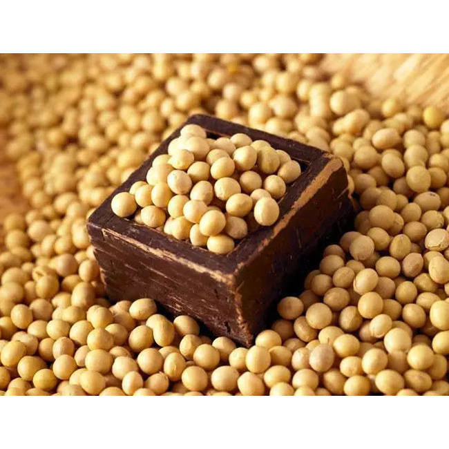 Non Gmo Dried Soyabean Seed Supply in Bulk from Leading Supplier