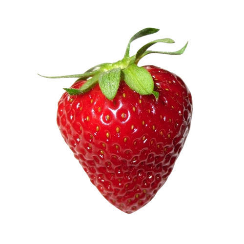high quality export best price strawberry red in india